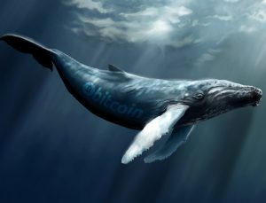 نهنگها سرمایهها