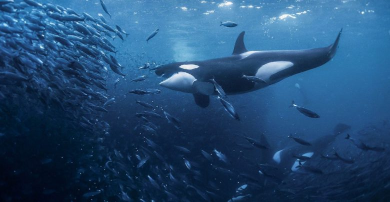 نهنگ ها بیت کوین